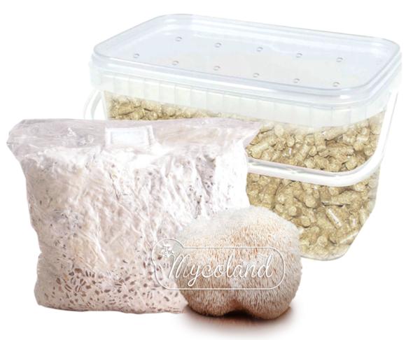 põhupelleti karp seente kasvatamiseks kodus